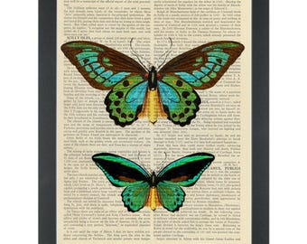 Butterflies green botanical drawings Dictionary Art Print