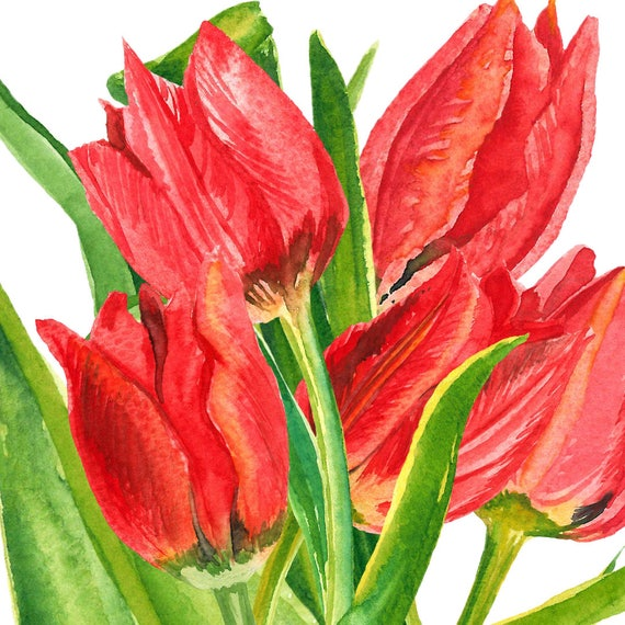 Spring flower clipart tulip clipart narcissus clipart etsy image 0 mightylinksfo