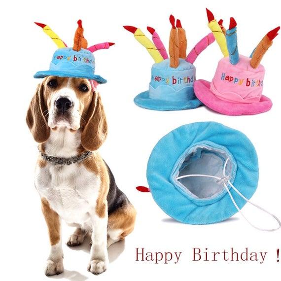 Birthday Hat Candle Dog Cat