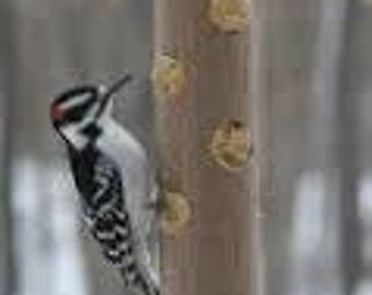 Woodpecker Jr. Bird Feeder PreFilled 202