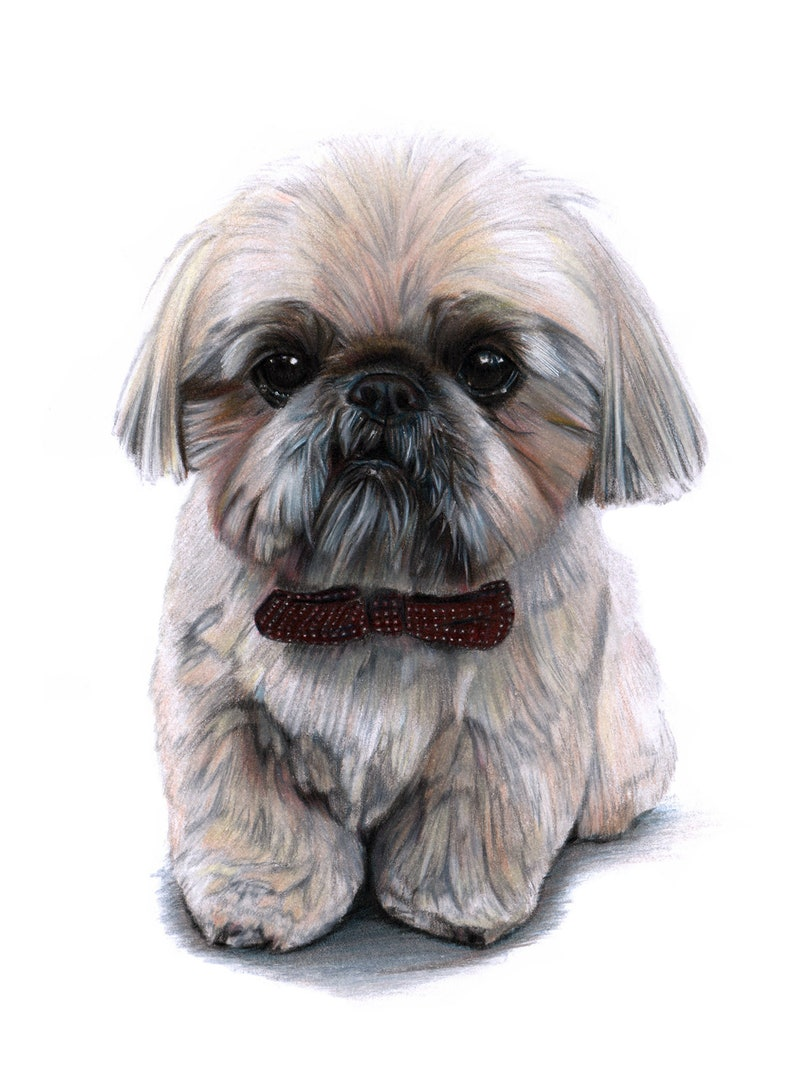 Pet Portrait Traditional Custom Drawing / Painting in Coloured image 0