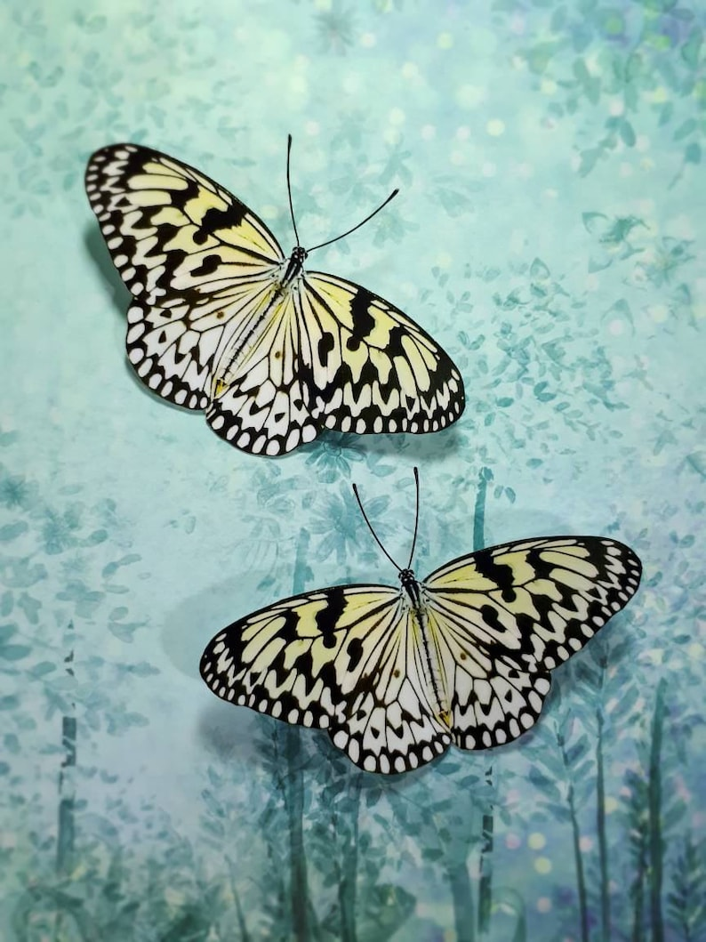 Idea Leuconoe 3D Acetate Butterfly decoration  wall decal  sticker Butterfly Decal Tree Nymph Paper Kite Fridge Magnet
