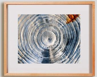 Salty Log Print.  Nature photography, tree, white, decor, wall art, artwork, large format photo.