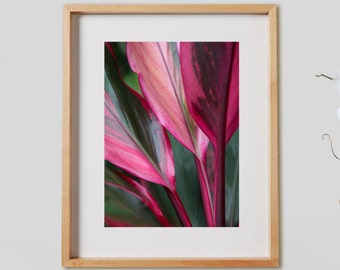 Cordyline Terminalis Print.  Tropical leaf photography, pink, green, botanical, decor, wall art, artwork, large format photo.
