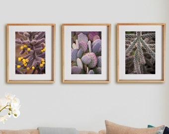 Nature 3V Print Collection.  Detail photography, cactus, southwest, purple, wall art, artwork, large format photo.