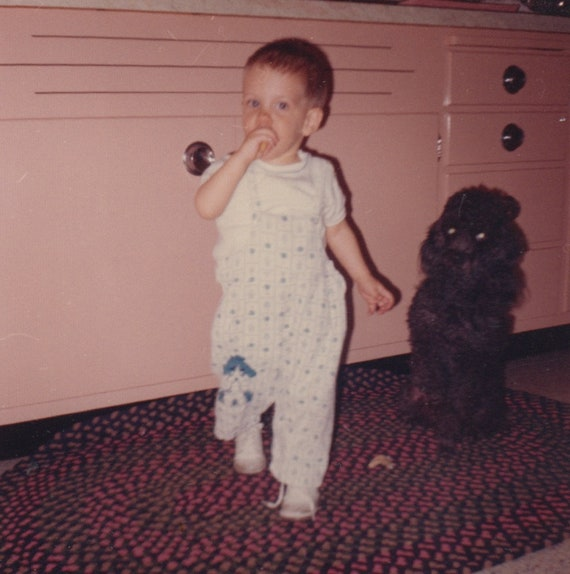 Boy With Poodle 1950s Vintage Photo Baby And Dog Old Etsy