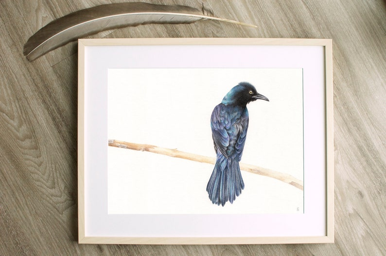 Original Grackle Drawing  Blackbird Drawing  Wildlife image 0