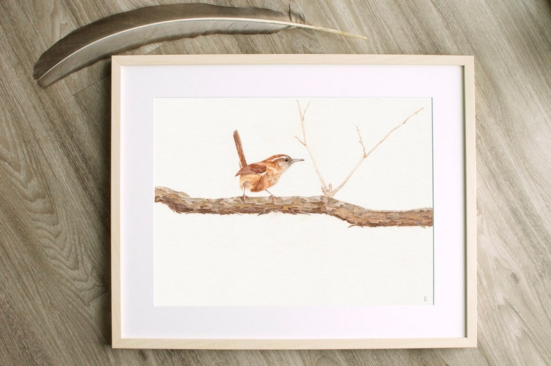 Original Carolina Wren Drawing  Bird Drawing  Wildlife image 0