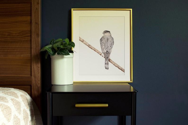 Coopers Hawk Bird Art Print  Wildlife Art Print  Outdoor image 0
