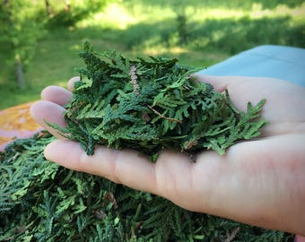 White Cedar Leaf -Loose Leaf By The Ounce - Smudging - Incense - Purification - Protection - Native American -Organic - Wild Grown