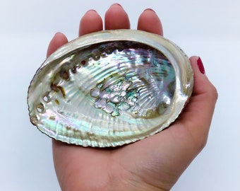 "Abalone Shell - Perfect For Smudge Sticks - Alter Tool - High Quality - One Side Polished - Native American - Smudge Tool - 5-6"" Shell"