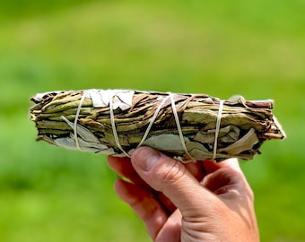 "Yerba Santa and White Sage Smudge Sticks - Sold Individually - Organic - 6"" - Native American - Wild Grown"
