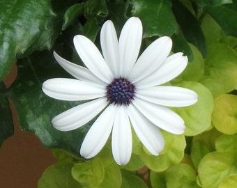Single white flower...