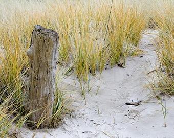 EASTERN SHORE Beachwood Vetiver breakaway melts