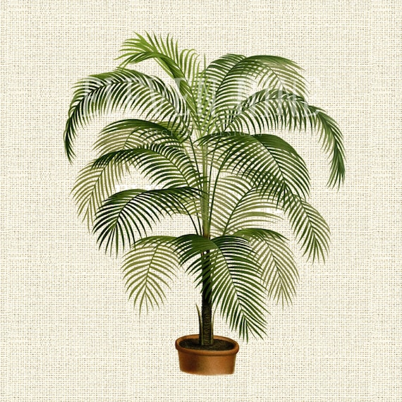 Palm Tree Clipart Graphic Design... Wall Art Prints Botanical Downloadable Print Ruffled Fan Palm PNG /& JPG Files for Collages