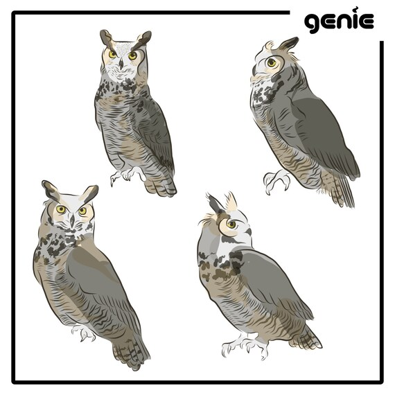 Great Horned Owl Bird Vector Graphic Illustration Hand Drawn