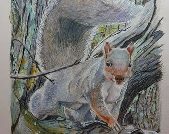 """Grey Squirrel , """" I see you """""""