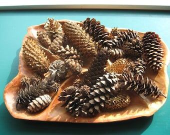 Mixed pine cone bowl filler for rustic home or wedding decor, or craft supply