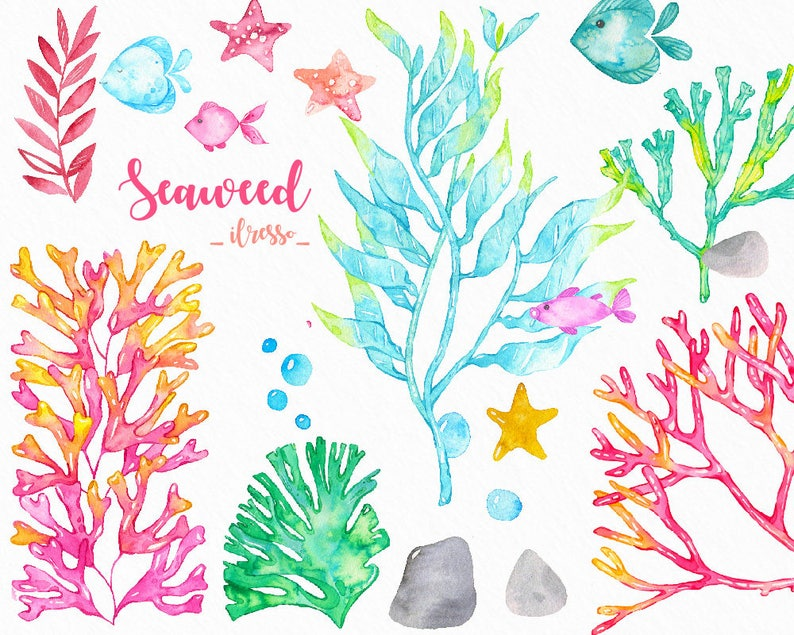 Clipart Di Alghe Dell Acquerello Oceano Scrapbook Etsy