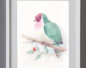 Sale-30% was 53.00 Fruit Dove, Original watercolor bird, 18 cm x 26 cm