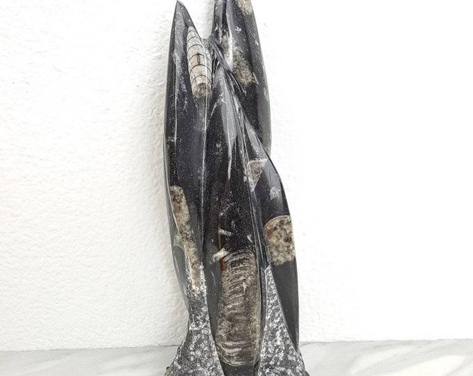Orthoceras Fossil Black Gray Crystal Stone Holistic Healing Statue Display Altar Shrine Home Decor