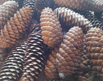 35 Spruce Pinecones,Craft Supply,Wreath Material,Christmas,Wedding,Decor,Natural,Pine Tree,Real Pine Cones