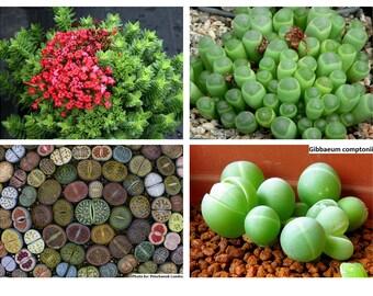 Unusual Seeds
