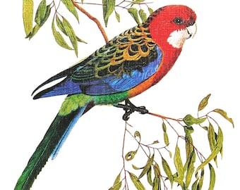 Greeting card - Eastern Rosella - Australian parrot - Colourful Australian bird