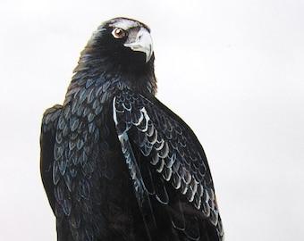 Greeting card - Wedge-tailed Eagle, Eagle, Australian Eagle, Raptor, Bird of Prey