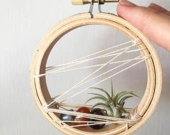 Air Plant- Hoop Home