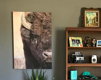 Southwest American Art - Bison, Buffalo - Large 24x36 Canvas Wrap - Modern Photography - Free Shipping