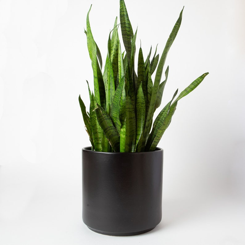 30 Off Planter Seconds Matte Black Ceramic Cylinder Planter Etsy