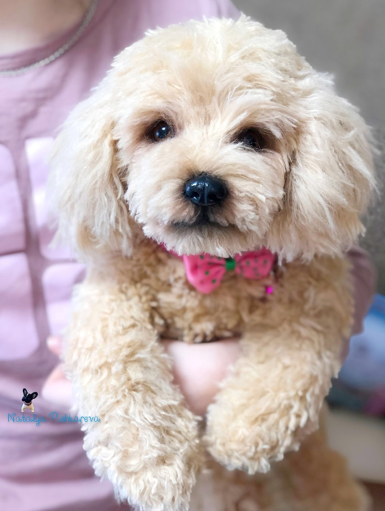 puppydog poodle  15 in realistic toy MADE TO ORDER 36 cm