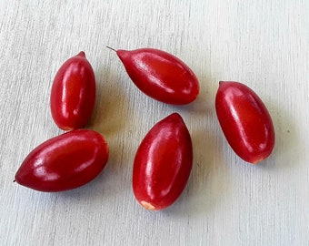 FRESH/EDIBLE - -  Miracle fruit- -  Synsepalum dulcificum: Taste altering berries. A true wonder of the fruit world!