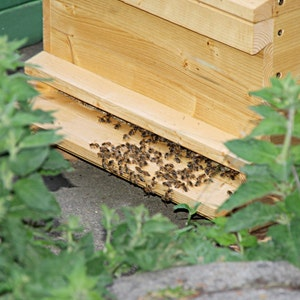 hechas 100/% de cera de abeja con fragancia propia. Velas de cera de abeja natural 10er Set