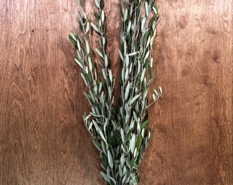 Fresh Olive Branch Bunches