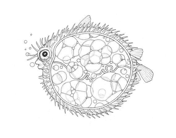 Anatomía de un pez globo   Etsy