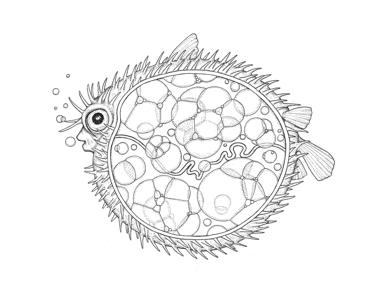 Anatomía de un pez globo | Etsy