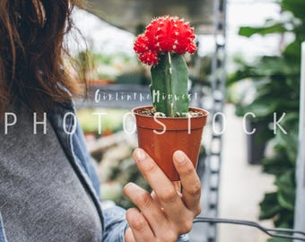CACTUS, plants, gardening, HIGH DEFINITION, Styled Stock Photography, Stock Photo, Stock image, #5132