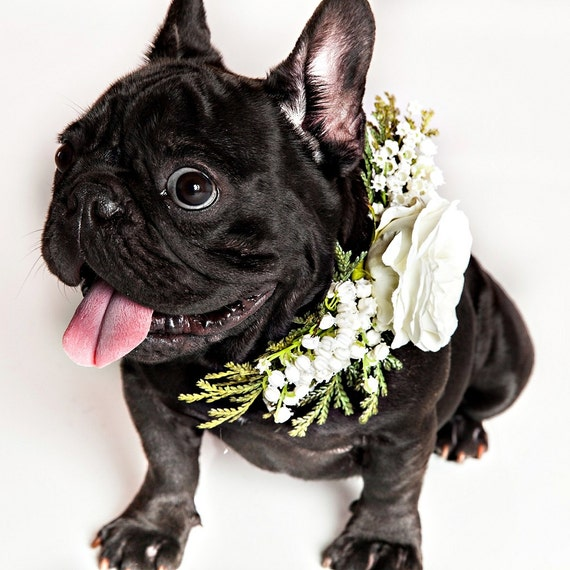 Lulu Belle Hochzeit Hundehalsband Hund Blume Krone Blume Etsy