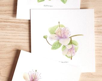 fiori di cappero - art print