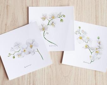 phalenopsis - art print