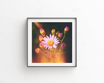 """instant download, floral photography, floral print, flower photography, wildflowers, wildflower print, nature photography, art print """"Aster"""""""