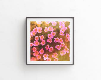 "Floral Photography, Floral Art, Bright Art, Wall Decor, Flower Photography, Digital Download, Instant Download, Nature Photography ""Pinky"""