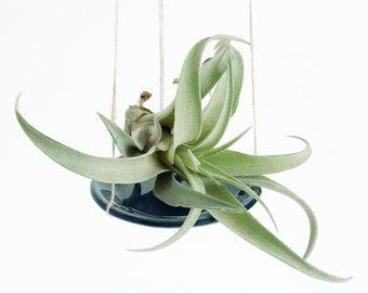 air plant holder, dish with thin strings, handmade, hand built, ceramics, stoneware, clay, glazed