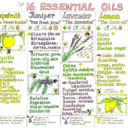Essential Oils Chart by Liz Cook
