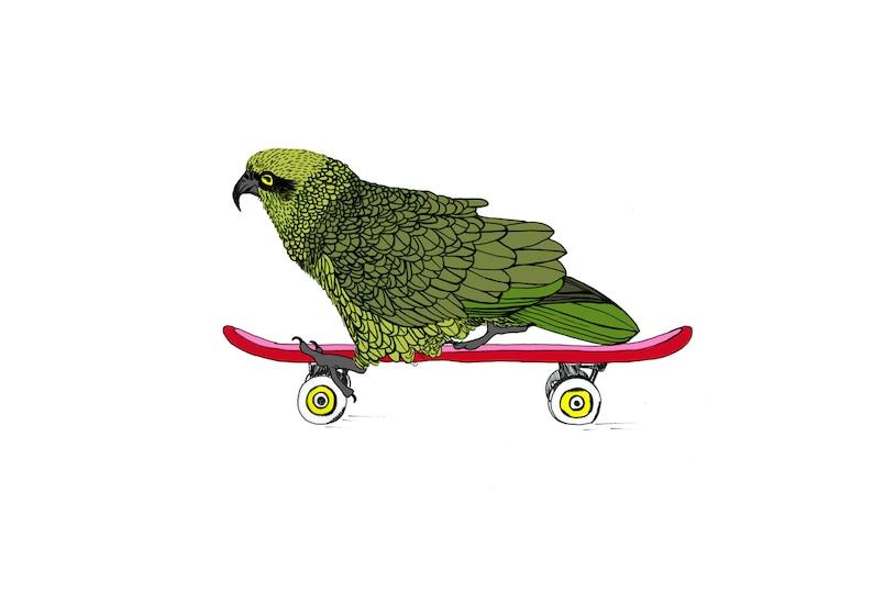 Illustrated Kea on skateboard Print A4A3