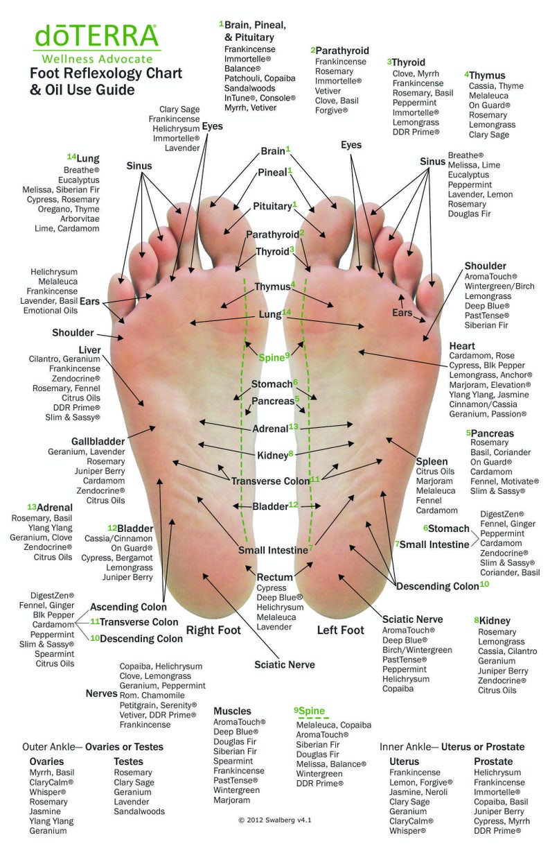 10 Pack - MINI Essential Oil Reflexology Chart & Oil Use Guide (5 5 x 8 5)  on 14pt card stock