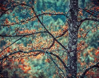 AUTUMN PRiNT: BERNHEIM FOREST, fine art photography, woods photo, landscape nature photography, tree pics, fine art tree photography, trees