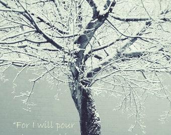 WINTERSCAPE- INSPIRATIONAL PRINT, ice, snow, blue color scheme, tree, nature photograph, tree print, religious spiritual print, Issaiah 44:3